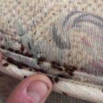 Eliminate the Bed Bug Infestation by 4 Natural Ways