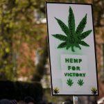 The Differences Between Marijuana and Hemp: Cannabis